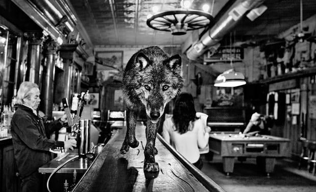 wolf main st 4000